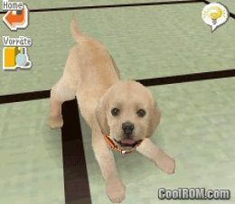 How To Call Your Dog S Name In Nintendogs